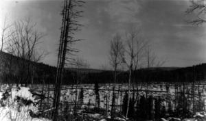 Coupe à blanc dans la région de Rivière-Verte