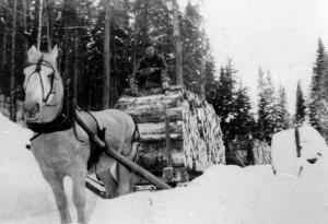Horse Pulling a Sled Loaded with 4-Foot Logs