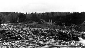 Pile up of 16-Foot Logs