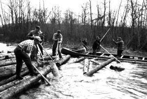 Drivers Freeing Logs with Pike Poles
