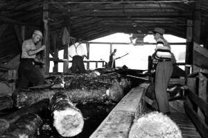 Chargement de bois de pulpe au moulin Davis
