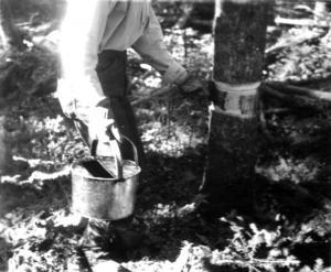 Application d'un produit chimique sur l'écorce d'un arbre