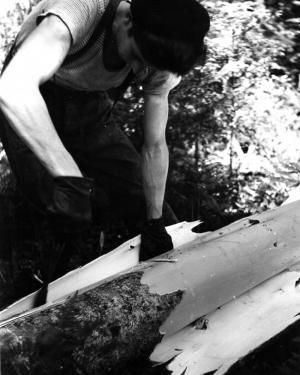 Écorçage d'un tronc d'arbre