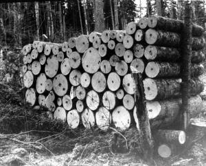 Une corde de bois de pâte