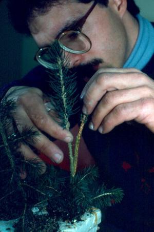 Examen d'un plant au laboratoire de la pépinière