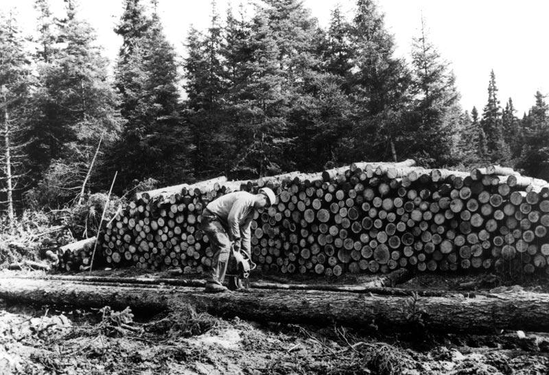 Coupe d 39 un tronc d 39 arbre - Tronc d arbre coupe ...