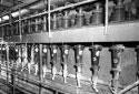 Nettoyeurs Bauer pour enlever la saleté dans la pâte à l'usine Fraser d'Edmundston