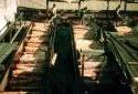Les écorceuses Thorne de l'usine Fraser d'Edmundston en 1945