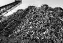 Une pile de bois à pâte dans la cour de l'usine Fraser d'Edmundston