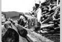 Des travailleurs placent du bois sur le convoyeur