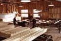 Tri des planches dans l'entrepôt de triage à la scierie Fraser de Plaster Rock