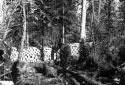 Cheval qui hale des troncs d'arbres