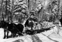Deux chevaux tirant un traîneau chargé de bois