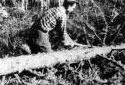 Débroussaillage d'un arbre