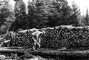 Coupe d'un tronc d'arbre