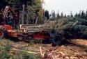 Abatteuse-ébrancheuse  après une coupe d'arbres