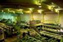 Travailleur d'usine à l'atelier de sciage dans la scierie Fraser de Plaster Rock
