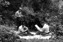 Hommes vérifiant les graines des cônes