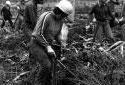 Plantation d'arbres à Saint-Quentin