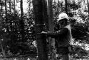 Mesureur d'arbres dans la forêt