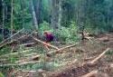 Sciage de bois avec une scie à chaîne