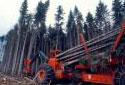 Abatteuse-ébrancheuse coupant un arbre