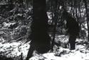 Coupe d'arbres à la hache et au godendard