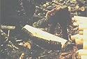 Un homme enlève l'écorce d'une bille de 4 pieds
