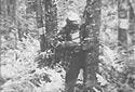 Des hommes enlèvent un bout d'écorce sur des arbres encore debout