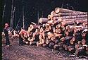 Étapes pour scier les troncs d'arbre